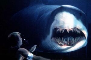 世界上牙齿第二多的动物,鲨鱼5000多颗(一生换牙2万多颗)