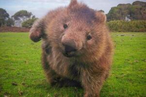世界上最笨的动物排名,猪是假笨/鸵鸟越大越笨/袋熊笨的不会走路