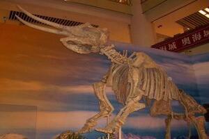 世界上最早的长鼻象,轭齿象(生存到人类历史早期)