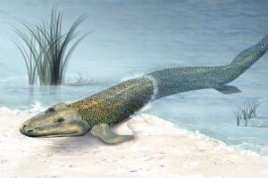 潘氏鱼是人类的祖先?海陆动物的过渡物种(3.8亿年的鱼)
