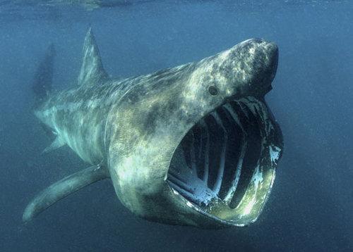 """""""海中狼""""白鲨会病患癌症吗?科学家回答:不仅如此"""