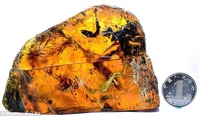 琥珀中困着1亿年的小鸟已绝灭