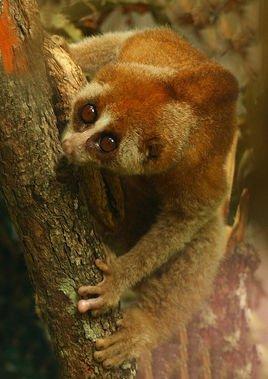 世界五种稀有动物 你见过了吗?