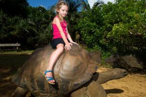 世界上最大的陆龟,加拉帕戈斯象龟(长1.5米能当坐骑)