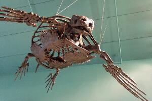 地球史上最大的海龟,古巨龟(体长4米重2.2吨)