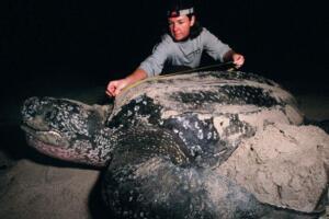 世界上最大的乌龟,棱皮龟海洋最大/象龟陆地最大(图片)