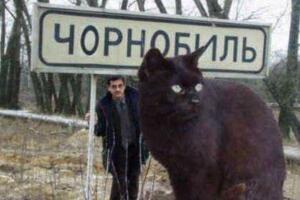乌克兰巨猫angie,核辐射造就的世界第一巨猫(PS作品)