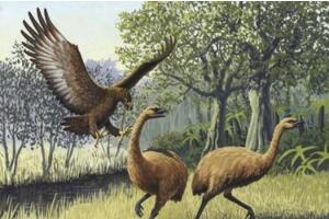 地球史上最大的鹰,哈斯特鹰翼展3.5米(500年前灭绝)