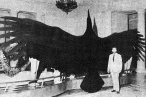 鹰的祖先阿根廷巨鸟,堪比飞机的史前猛禽(翼展7米)