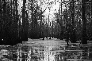 美国曼查克沼泽,被巫毒教女王诅咒的幽灵沼泽