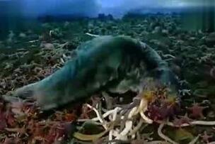 南极巨虫疯狂吞食巨型海豹,体长3米的古老深海巨怪