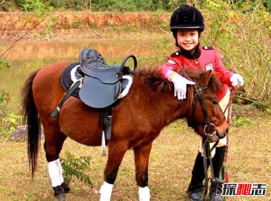 世界上最矮的马