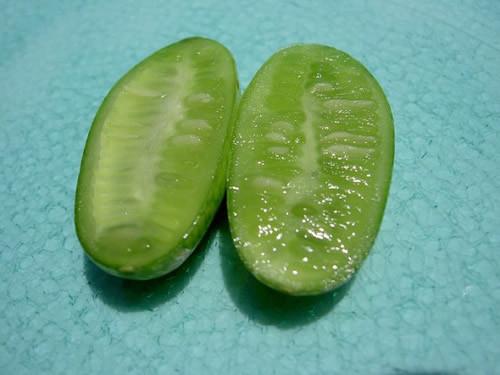 世界上最小的西瓜 只有拇指大小