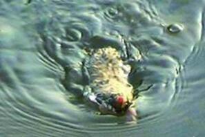 欧肯纳根水怪真的存在吗?体长150米的巨型水龙