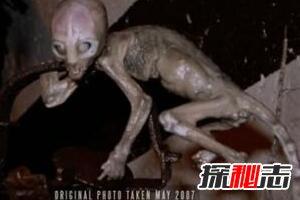 揭秘世界十大神秘生物真相,外星未知生物已入侵地球