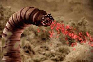蒙古死亡蠕虫真的存在吗,剧毒大肠虫被质疑是石龙子