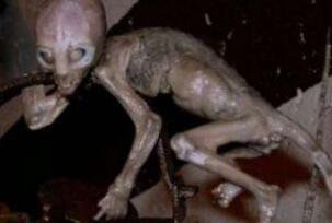 2007年墨西哥外星人宝宝事件,外星婴儿实则被改造的猴子