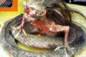 揭秘人头蛇身怪物之谜,人的脑袋蛇的身体(被巫师控制)