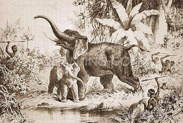 世界未解之谜大象坟地真的存在吗?